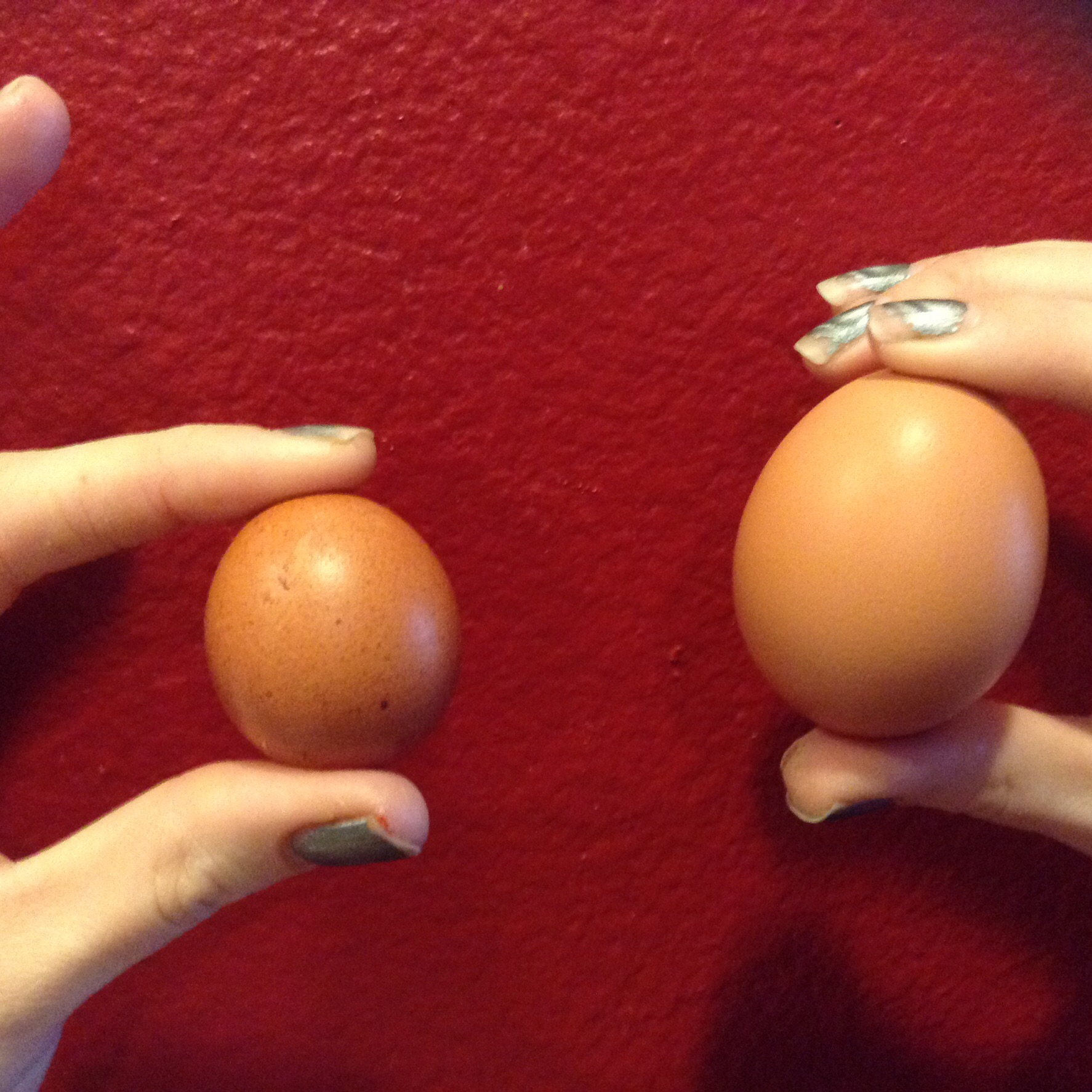 Fairy Egg and a regular egg.