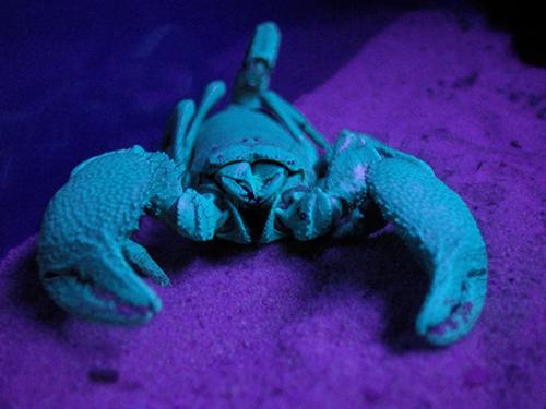 Happy Scorpion Anniversary!