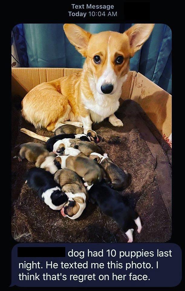 Mama Pupper Has Regrets